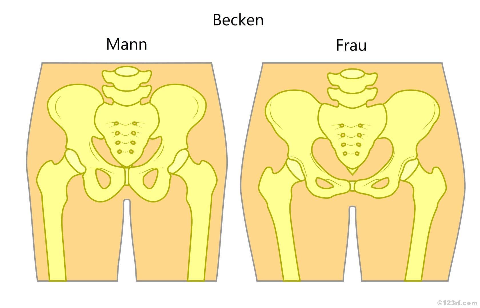 Beckenboden Anatomische Unterschiede