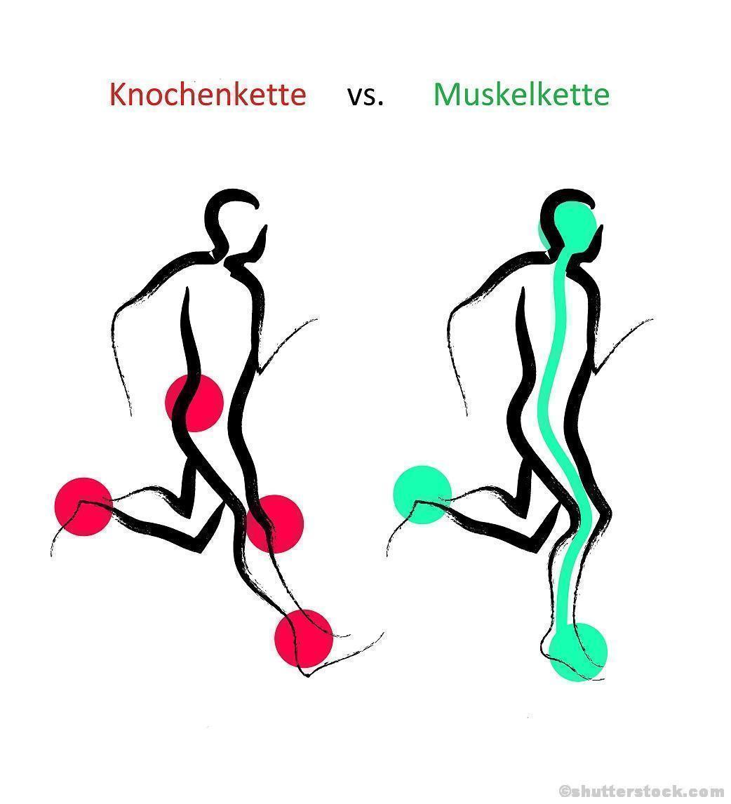 Fersengang Ballengang Ganganalyse Gehen Schritte Muskelkette Knochenkette