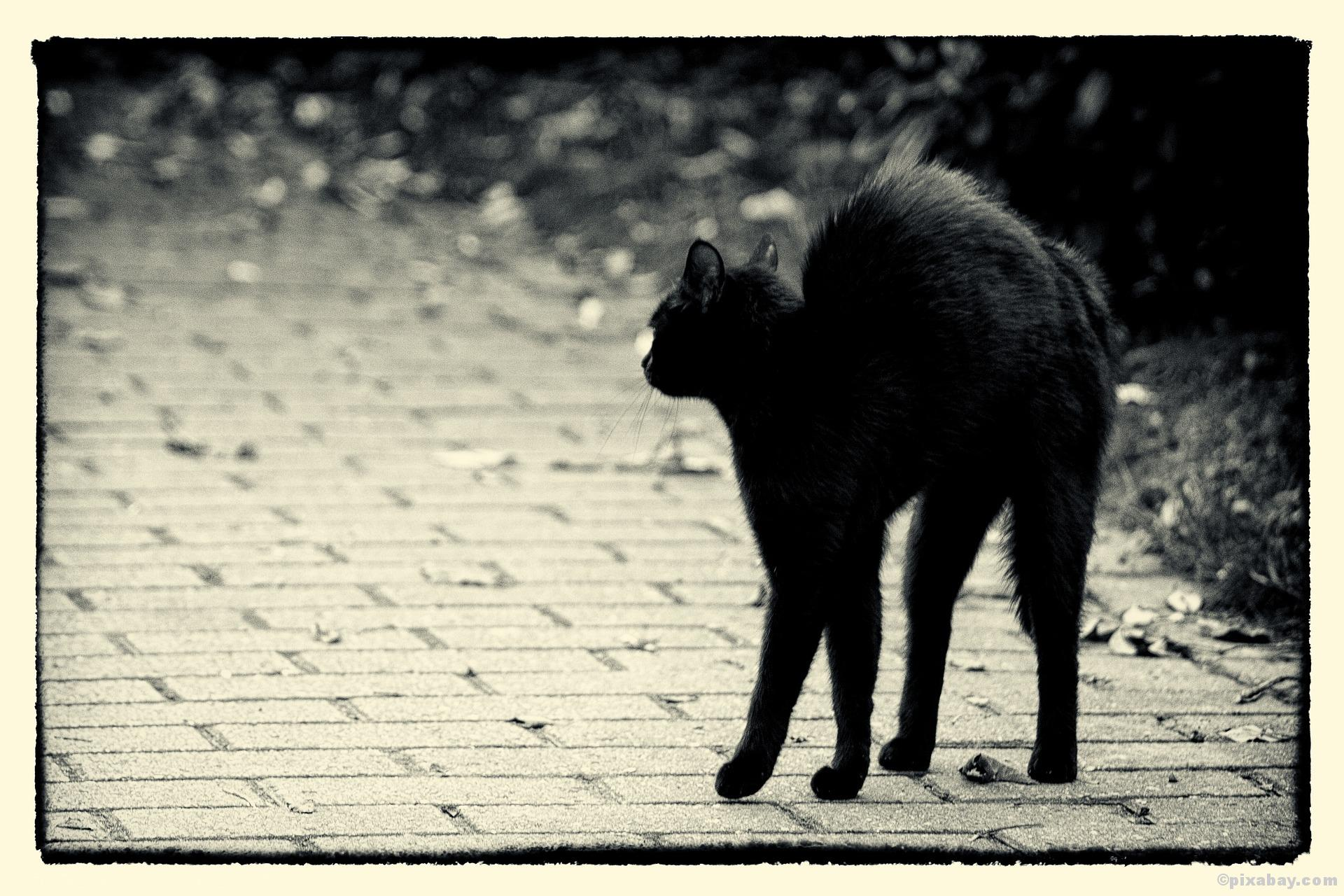 Freitag der 13, schwarze Katze, Aberglaube